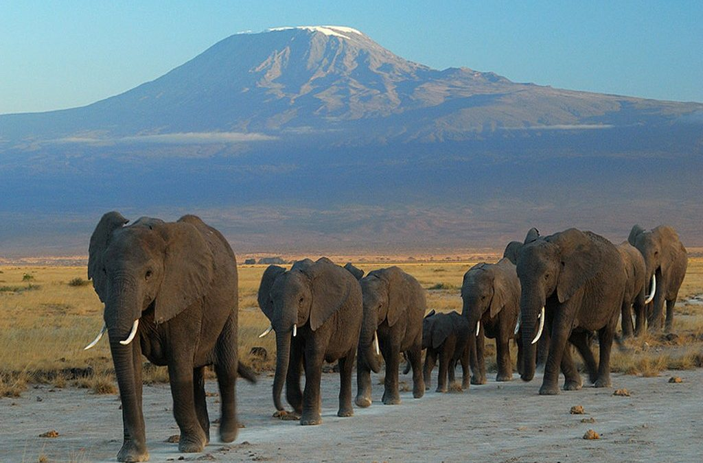 Kenya Southern Circuit – 6 Nights/7 Days