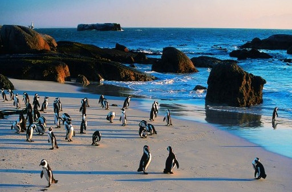Cape Luxe – 6 Nights/7 Days