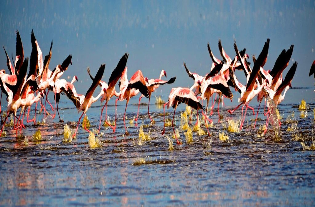Kenya Northern Circuit -5Nights/6 Days