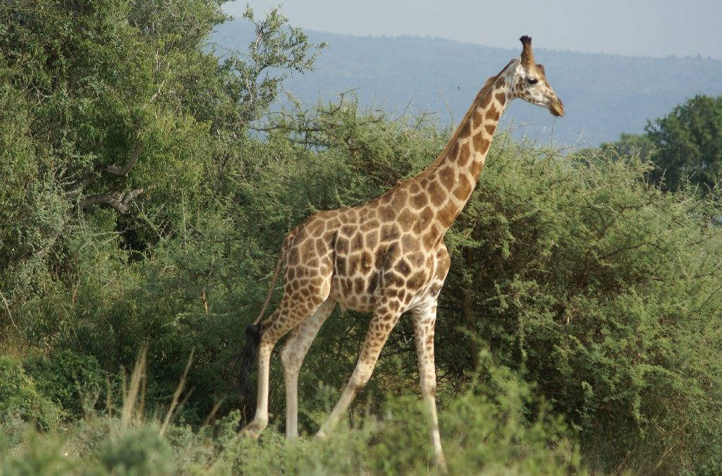 Ultimate Uganda Tour – 8 Nights/9 Days