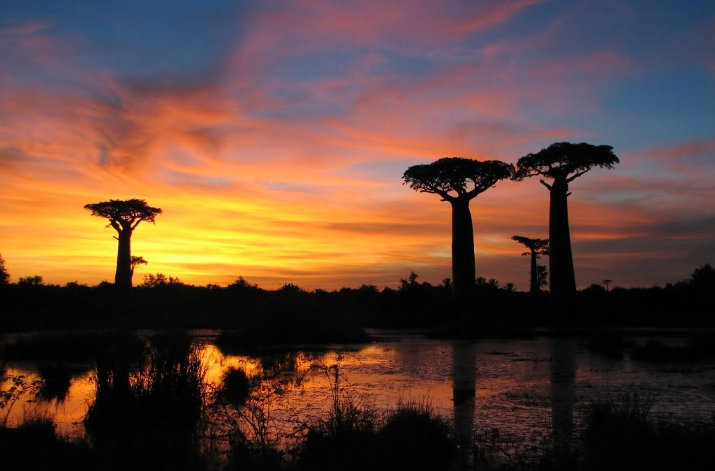 Madagascar Eastern Tour – 9 Nights/10 Days