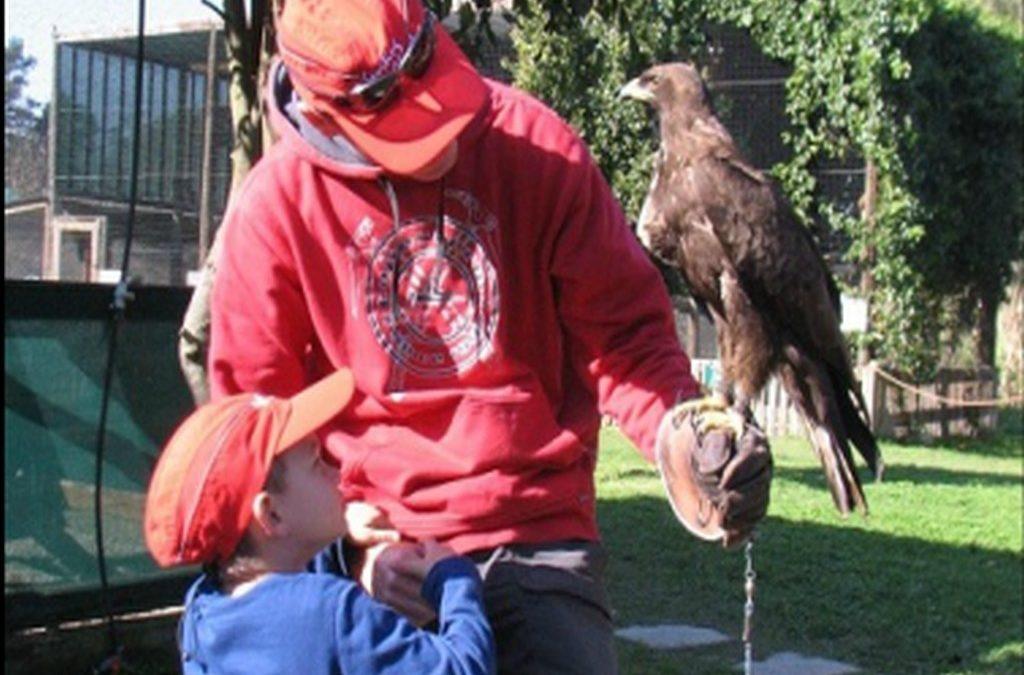 Eagle Encounters