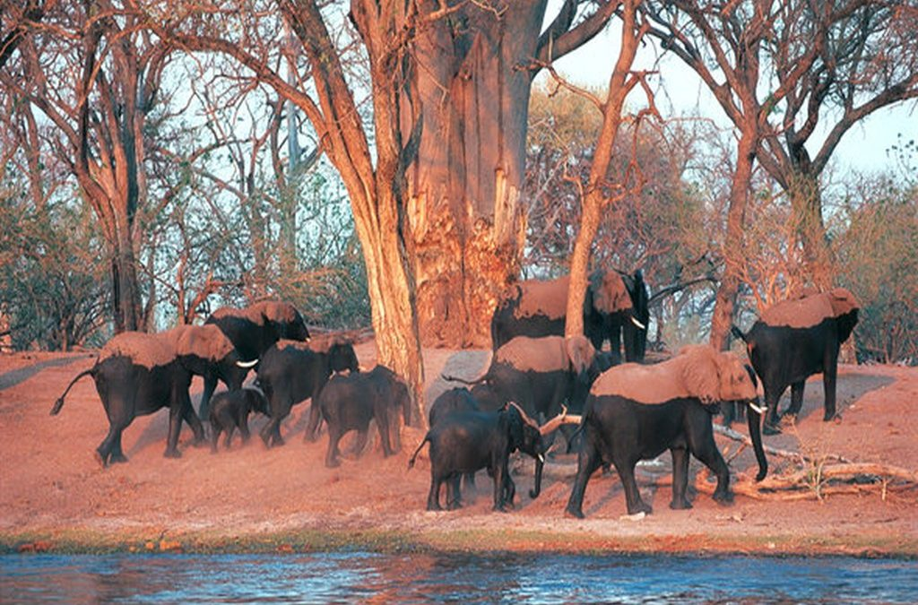 Victoria Falls and Chobe Package – 5 Nights/6 Days