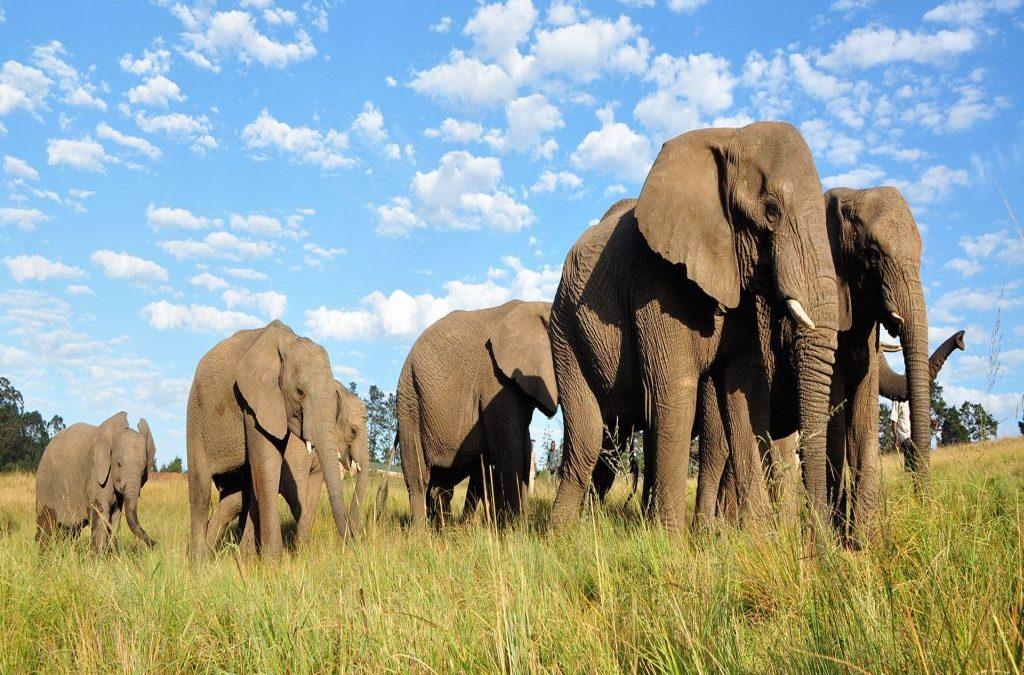 The Knysna Elephant Park