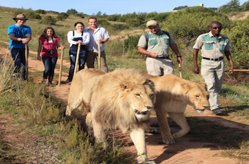 Walk With The Lions